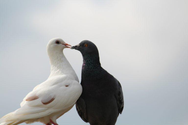 Wieso Tiere bei der Hochzeit ein No-Go sind